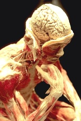 Anatomyt and Physiology Course (ITEC Level 3)
