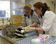 Wildlife Rehabilitation Course